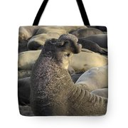 Elephant Seals Tote Bag