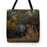 Elephant Trail Tote Bag