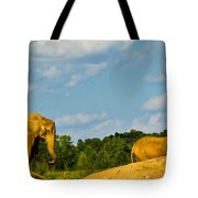 Elephants Among The Rocks. Tote Bag