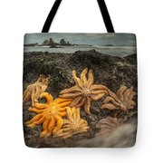 Eleven-armed Sea Stars At Low Tide Tote Bag