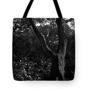 Elizabethan Gardens Tree In B And W Tote Bag