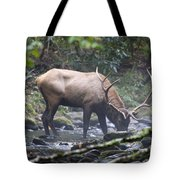 Elk Drinking Water From A Stream Tote Bag