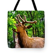 Elk - Grand Canyon National Park Tote Bag