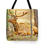 Elk In Kiabab National Forest Arizona Tote Bag