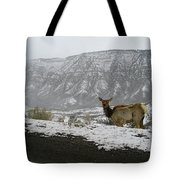 Elk In The Park Tote Bag