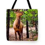 Elk - Mather Grand Canyon Tote Bag