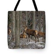Elk Pictures 45 Tote Bag