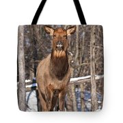 Elk Pictures 50 Tote Bag