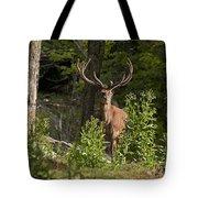 Elk Pictures 82 Tote Bag