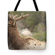 Elk Sky Gaze Tote Bag