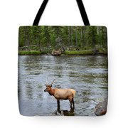 Elk Stag In The Madison River Of Yellowstone National Park Tote Bag