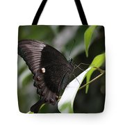 Emerald Peacock Swallowtail Butterfly #6 Tote Bag