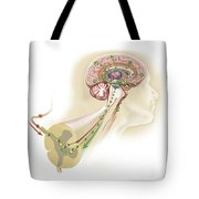 Endorphins Released In The Hypothalamus Tote Bag