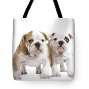 English Bulldog Puppies Tote Bag