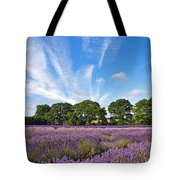 English Lavender Fields In Hampshire Tote Bag