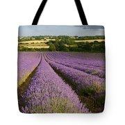 English Lavender Near Alton In Hampshire Tote Bag