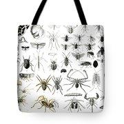 Entomology Myriapoda And Arachnida  Tote Bag