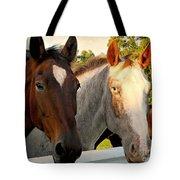 Equestrian Beauties Tote Bag