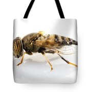 Eristalinus Taeniops Hoverfly Isolated Oin White Background Tote Bag