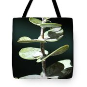 Eucalyptus Tears Tote Bag