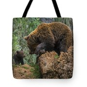 Eurasian Brown Bear 13 Tote Bag