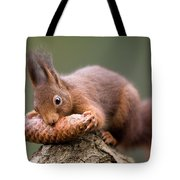 Eurasian Red Squirrel Biting Cone Tote Bag by Ingo Arndt