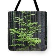 European Beech Tree In Noway Spruce Tote Bag