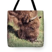European Bison  Bison Bonasus Tote Bag