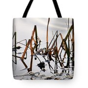 European Common Brown Frog Tote Bag