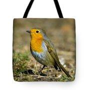 European Robin Square Tote Bag