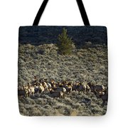 Evening Herd Of Elk   #7640 Tote Bag