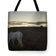 Evening In New Forest Tote Bag