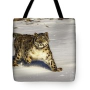 Evening Prowl Tote Bag
