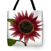 Evening Sun Sunflower 2 Tote Bag