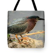 Everglades Green Heron Tote Bag