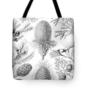 Examples Of Coniferae From Kunstformen Tote Bag by Ernst Haeckel