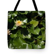 Exotic Colored Waterlilies In The Hot Mediterranean Sun Tote Bag