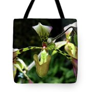 Exotic Ladyslipper Tote Bag