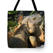 Eyeing The Landscape Tote Bag