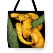 Eyelash Viper Tote Bag