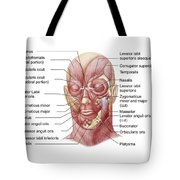 Facial Muscles Of The Human Face Tote Bag