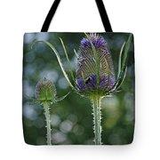 Fading Teasel Flower Tote Bag