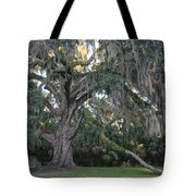 Fairchild Oak With Sunbeam Tote Bag