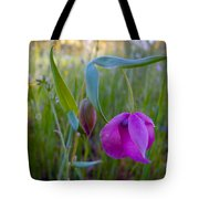 Fairy Lantern In Park Sierra-ca Tote Bag