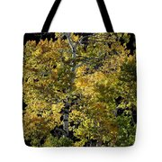 Fall Aspen Tote Bag