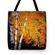 Dazzling Birch Tote Bag
