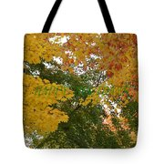 Fall Canopy Tote Bag
