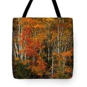 Fall Colors Greeting Card Tote Bag