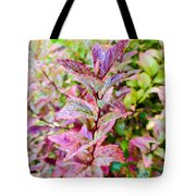 Fall Colors On A Foggy Day 2 Tote Bag