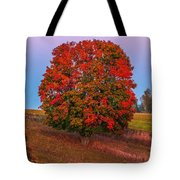 Fall Colors Over A Big Tree In Warmia In Poland During Twilight Hour Tote Bag
